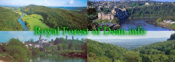 Royal Forest of Dean Dog Friendly Places