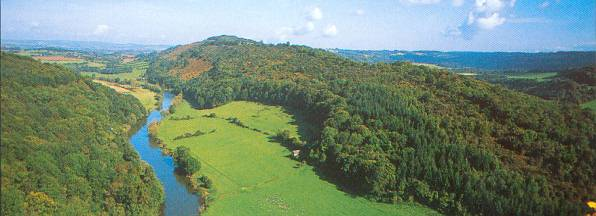 Forest of Dean View